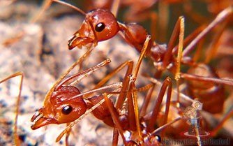 White Ant Control Sydney