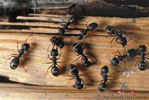 White Ant Removal Sydney