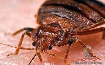 Bedbug Removal Sydney