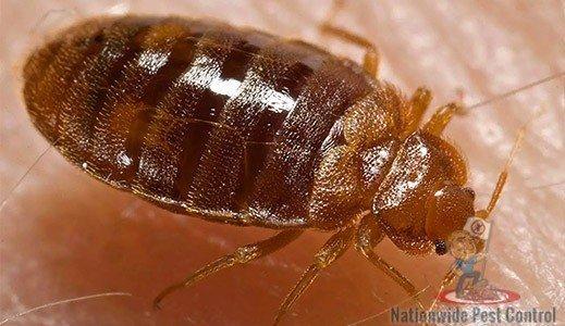 Bed Bug Removal & Control Sydney