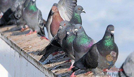 Bird Control & Removal