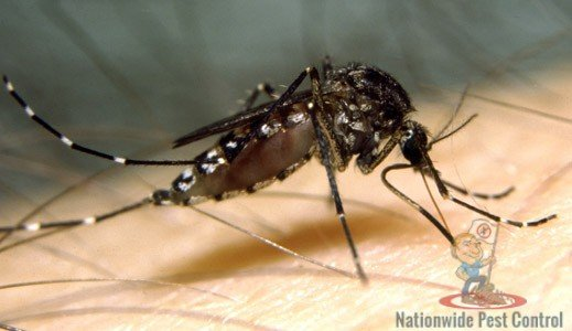 Mosquito Control & Removal Services