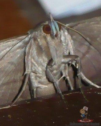 Moth Removal Sydney