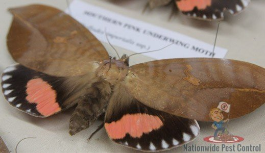 Moth Control & Removal Services