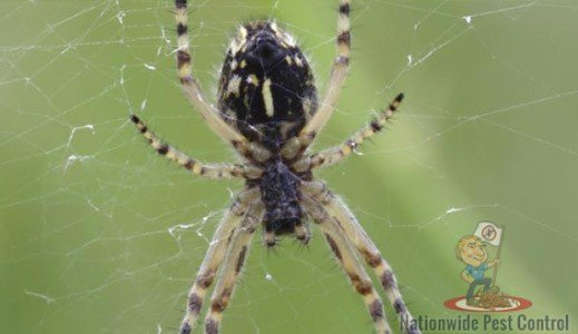 Spider Control & Removal Serivces