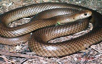 Snake Control Sydney