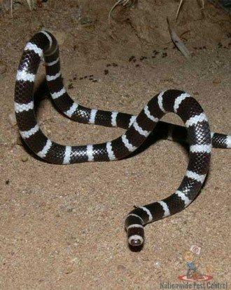 Snake Removal Sydney