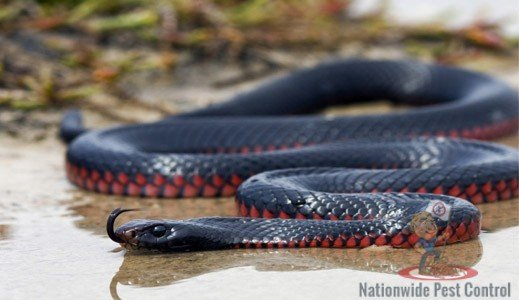 Snake Control & Removal Services