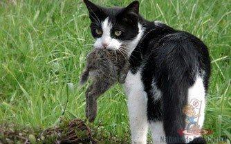 Feral Cat Control Sydney