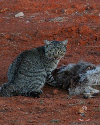 Feral Cat Removal Sydney
